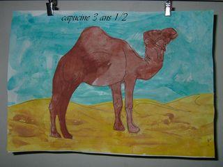 dromadaire dans le sable de capucine