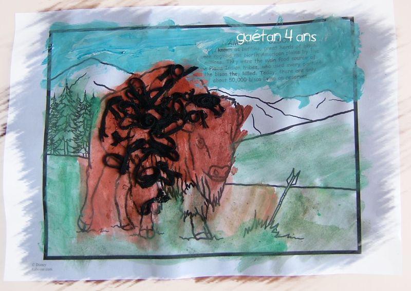 Bison capucine