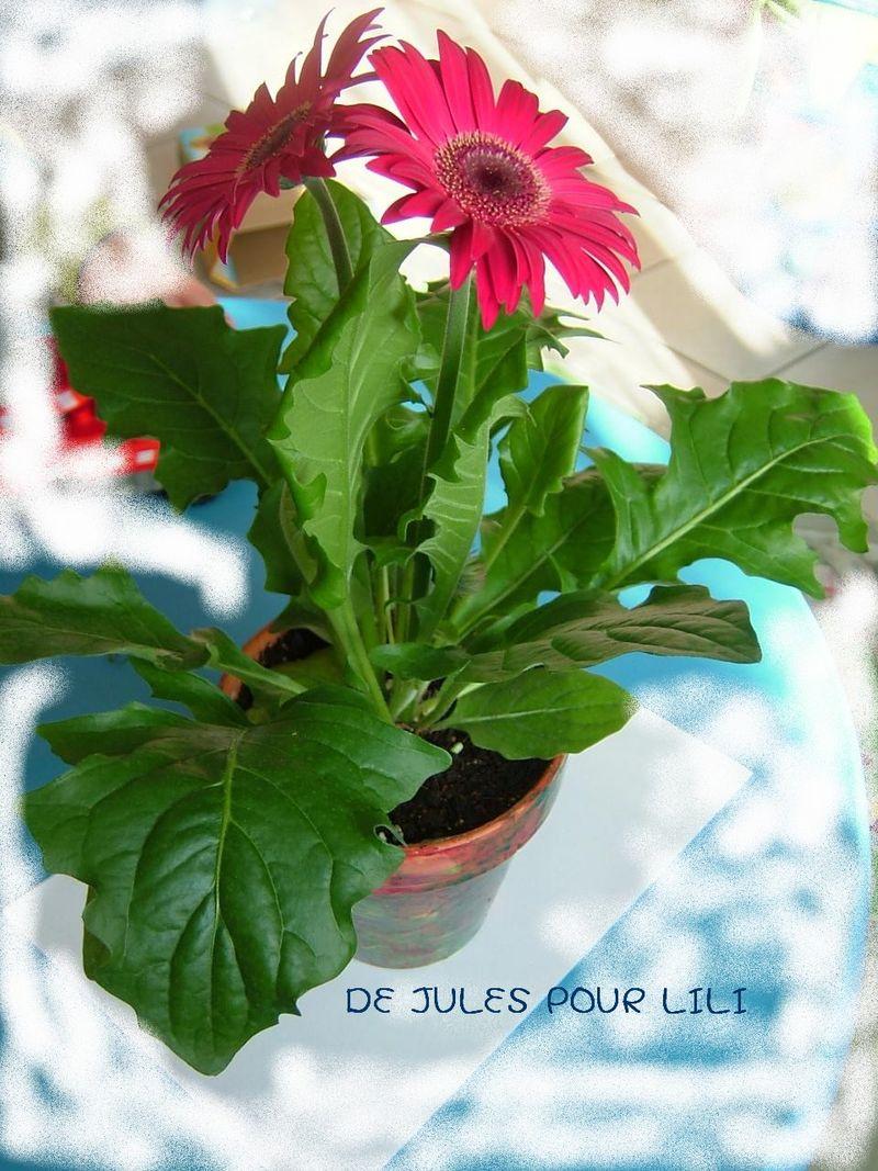 Le pot de fleur de jules