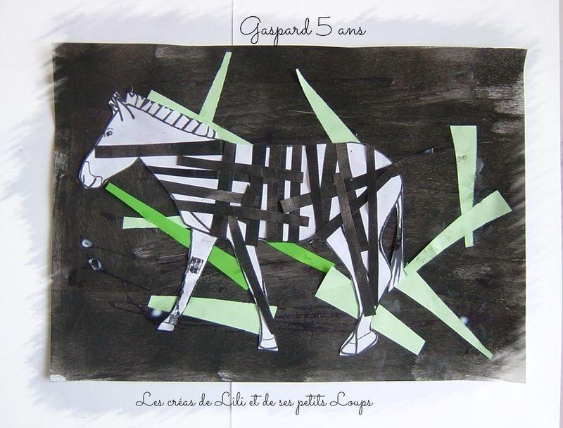Zebre gaspard