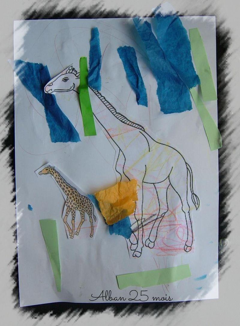 Girafe alban