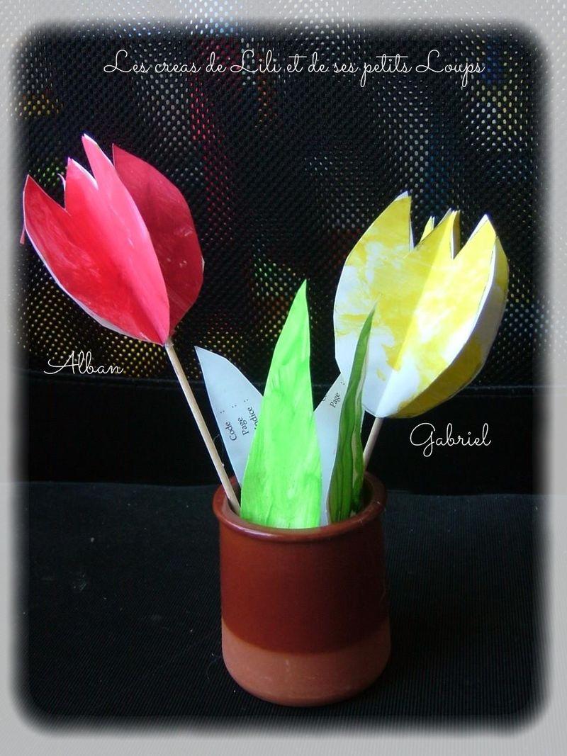Tulipe posées