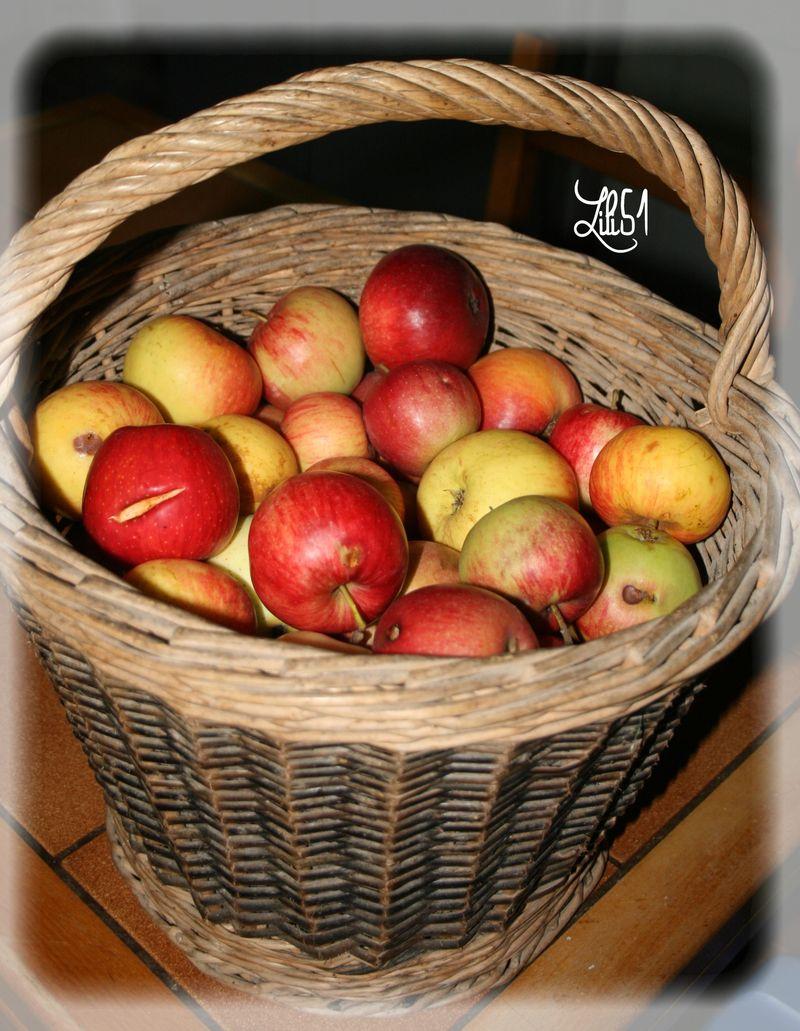 Panier vraie pommes