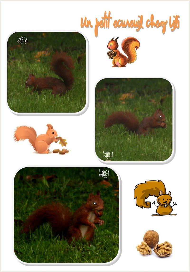 Un petit ecureuil chez lili