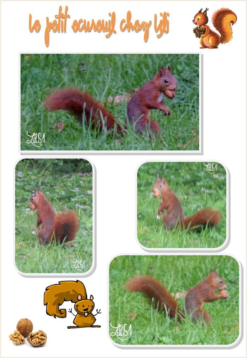 Le petit ecureuil chez lili