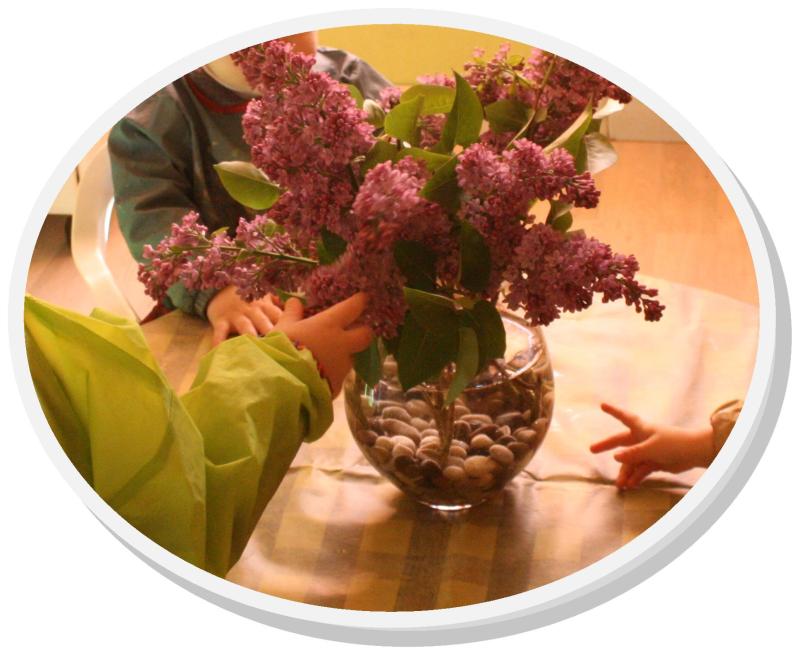 Lilas de lili